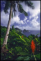 Palm tree and wild ginger along the road from Afono to Vatia, Tutuila Island. National Park of American Samoa ( color)