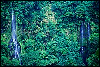 Ephemeral waterfalls in Amalau Valley, Tutuila Island. National Park of American Samoa (color)