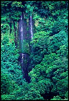 Ephemeral waterfall in Amalau Valley, Tutuila Island. National Park of American Samoa ( color)