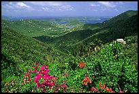 Tropical flowers and forest from Centerline road. Virgin Islands National Park ( color)