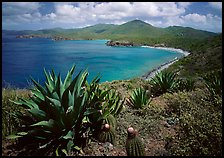 Agaves and cactus, and turquoise waters, Ram Head. Virgin Islands National Park ( color)