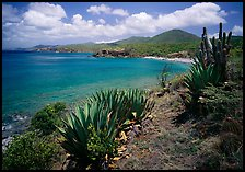 Agave and tropical turquoise waters on Ram Head. Virgin Islands National Park, US Virgin Islands.