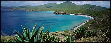 Agave plants growing on drier part of island. Virgin Islands National Park (Panoramic color)