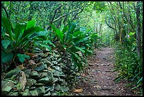 Trail and overgrown rock wall. Virgin Islands National Park ( color)