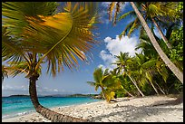 Palm trees on Salomon Beach. Virgin Islands National Park ( color)