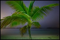 Palm tree and beach at night, Salomon Beach. Virgin Islands National Park ( color)