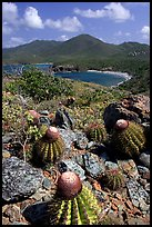 Cactus on Ram Head. Virgin Islands National Park, US Virgin Islands.