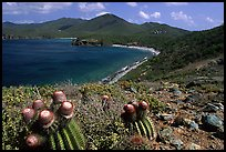 Cactus and bay, Ram Head. Virgin Islands National Park, US Virgin Islands.