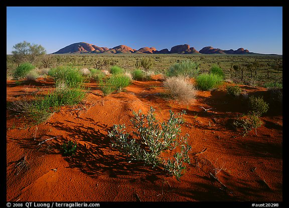 Pink sand dunes and Olgas. Olgas, Uluru-Kata Tjuta National Park, Northern Territories, Australia