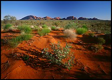 Pink sand dunes and Olgas. Australia ( color)