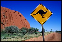 Kangaroo crossing sign near Ayers Rock. Australia ( color)
