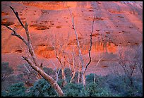 Trees at the base of the Olgas. Olgas, Uluru-Kata Tjuta National Park, Northern Territories, Australia (color)