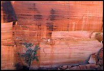 Rock wall striated with desert varnish in Kings Canyon,  Watarrka National Park. Northern Territories, Australia