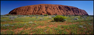 Ayers rock at noon. Uluru-Kata Tjuta National Park, Northern Territories, Australia (Panoramic color)
