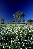 Wildflowers and trees. Northern Territories, Australia