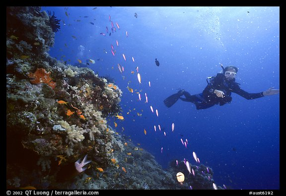 Scuba diver and school of fish. The Great Barrier Reef, Queensland, Australia