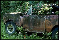 Wrecked truck invaded by flowers. Maui, Hawaii, USA (color)