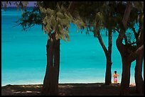 Turquoise waters and woman seen through Horsetail Ironwoods (Casuarina equisetifolia) at Waimanalo Beach. Oahu island, Hawaii, USA