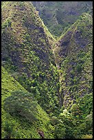 Steep walls covered with vegetation, Koolau Mountains. Oahu island, Hawaii, USA ( color)