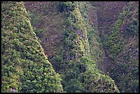 Steep ridges near Pali Highway, Koolau Mountains. Oahu island, Hawaii, USA ( color)