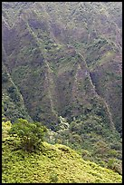Hillside and Pali. Oahu island, Hawaii, USA ( color)