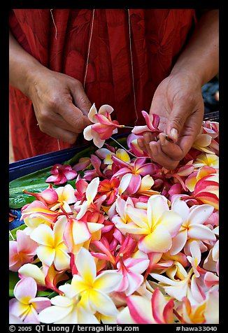 Hands preparing a fresh flower lei, International Marketplace. Waikiki, Honolulu, Oahu island, Hawaii, USA (color)
