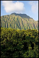 Tropical forest and fluted  Koolau Mountains. Oahu island, Hawaii, USA ( color)