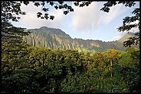 Tropical forest and  Koolau Mountains. Oahu island, Hawaii, USA ( color)