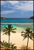 Palm trees and beach with no people, Hanauma Bay. Oahu island, Hawaii, USA