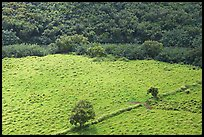 Trees, field, and ancient wall,  Wailua River Valley. Kauai island, Hawaii, USA ( color)