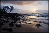 Windblown trees and ocean, Lydgate Park, sunrise. Kauai island, Hawaii, USA ( color)