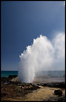 Stream of water shooting up from blowhole. Kauai island, Hawaii, USA (color)