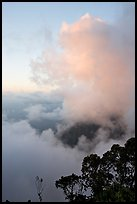 Trees and clouds, Kalalau lookout, sunset. Kauai island, Hawaii, USA ( color)