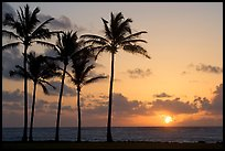 Coconut trees, Kapaa, sunrise. Kauai island, Hawaii, USA (color)