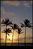 Cocunut trees, sunrise, Kapaa. Kauai island, Hawaii, USA