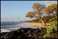 Boulders, trees, and beach, Lydgate Park, early morning. Kauai island, Hawaii, USA ( color)