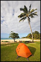 Tent and palm trees, Haena beach park. North shore, Kauai island, Hawaii, USA