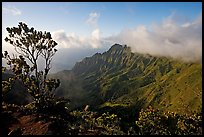 Kalalau Valley and tree, from the Pihea Trail, late afternoon. Kauai island, Hawaii, USA