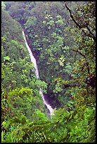 Kahuna Falls (400 feet high). Akaka Falls State Park, Big Island, Hawaii, USA ( color)