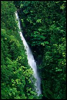 Kahuna Falls in a lush valley. Akaka Falls State Park, Big Island, Hawaii, USA ( color)