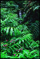 Lush ferns, flowers and waterfall. Akaka Falls State Park, Big Island, Hawaii, USA