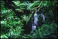 Waterfall amidst lush vegetation. Akaka Falls State Park, Big Island, Hawaii, USA ( color)