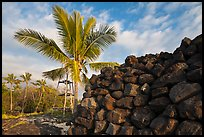 Heiau wall and palm tree, Kaloko-Honokohau National Historical Park. Hawaii, USA (color)
