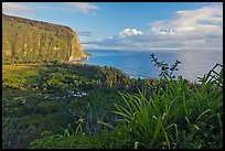 Waipio Valley and Ocean at sunrise. Big Island, Hawaii, USA ( color)