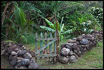 Tropical garden delimited by low stone walls. Maui, Hawaii, USA ( color)
