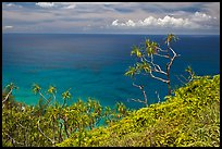 Ocean view from Kalalau trail. Kauai island, Hawaii, USA ( color)