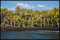 Black sand beach and palm trees, Punaluu. Big Island, Hawaii, USA ( color)