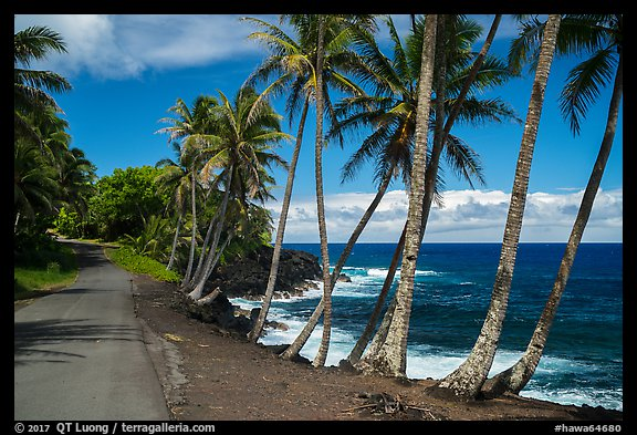Oceanside road with palm trees, Puna. Big Island, Hawaii, USA (color)