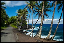 Oceanside road with palm trees, Puna. Big Island, Hawaii, USA ( color)