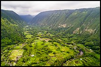 Aerial view of farmlands, Waipio Valley. Big Island, Hawaii, USA ( color)